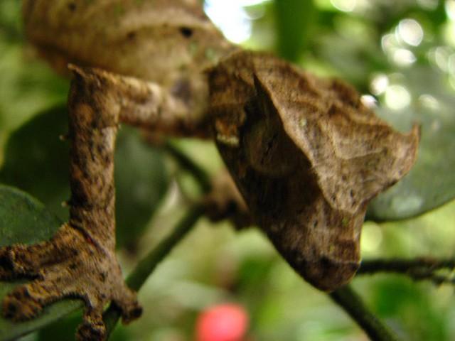 Header of leaf tail