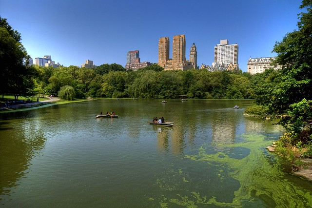 The lake, Central Park