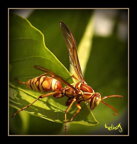Big Brown Bug