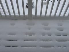 How much snow we got