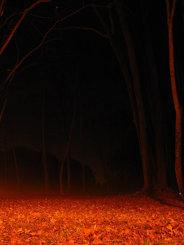 trees red mist leaves fog night dark blood gloomy branches atmosphere eerie tall silhoutte bloodrednight greeneyephoto