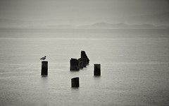 sea gull - desktop background wallpaper