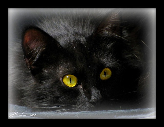 Persia just before her nap by J.Everhart