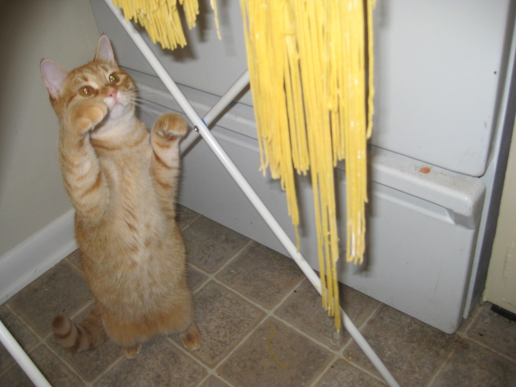 Kitten + homemade pasta = entertained kitten + no pasta.