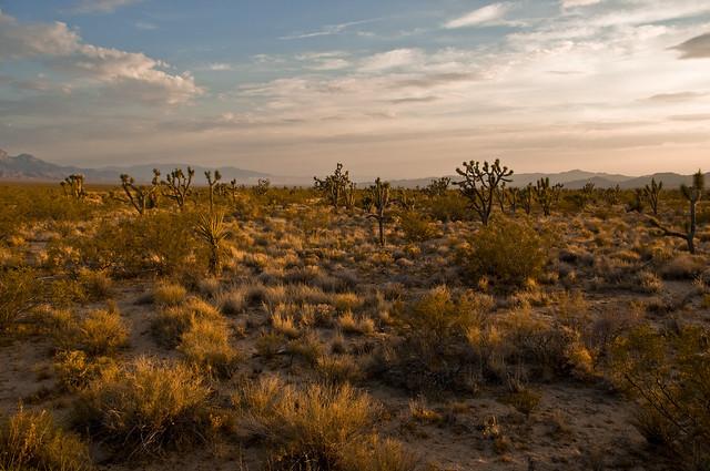 image photo mojave desert ca usa april
