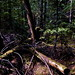 Small photo of Trailside