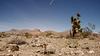 Desert Stars by The Midnight Writer