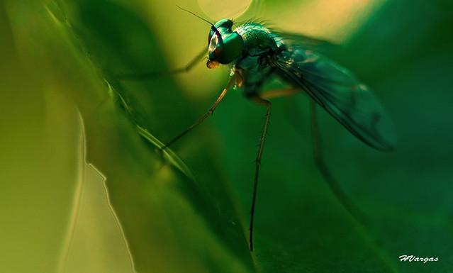 Elegant Fly1.jpg