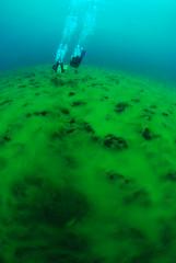 nwdc.com clear lake 148