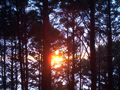 049: Sunset through the trees