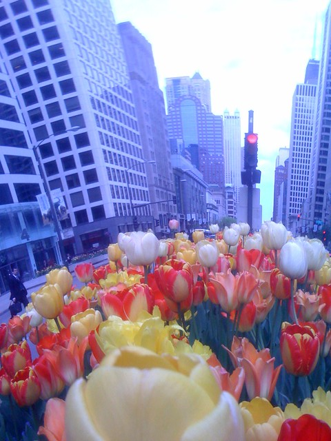 The tulips make everything into a cartoon world (4)