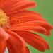 vivid petal details by pawprints