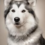 Posing Dog