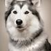 Posing Dog by Jonathan Laberge
