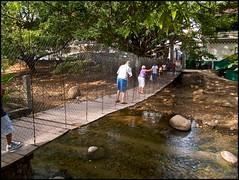 Crossing the Rio Cuale
