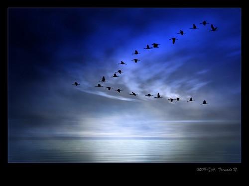 blue sunset españa water azul spain agua aves explore siluetas canon30d grullas a3b