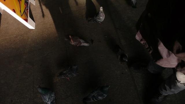 oh those pigeons, again