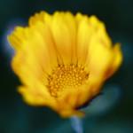 Closer Flower