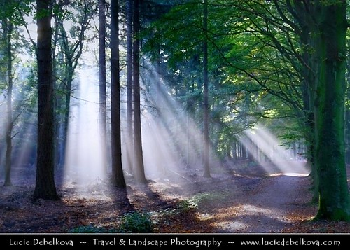 Netherlands - Magic Light in Lage Vuursche Forest
