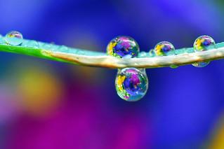 a splash of garden