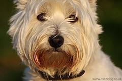 Highland Spanish Dog Rescue