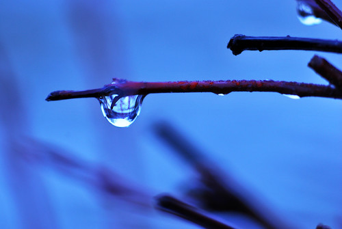World in a Raindrop...