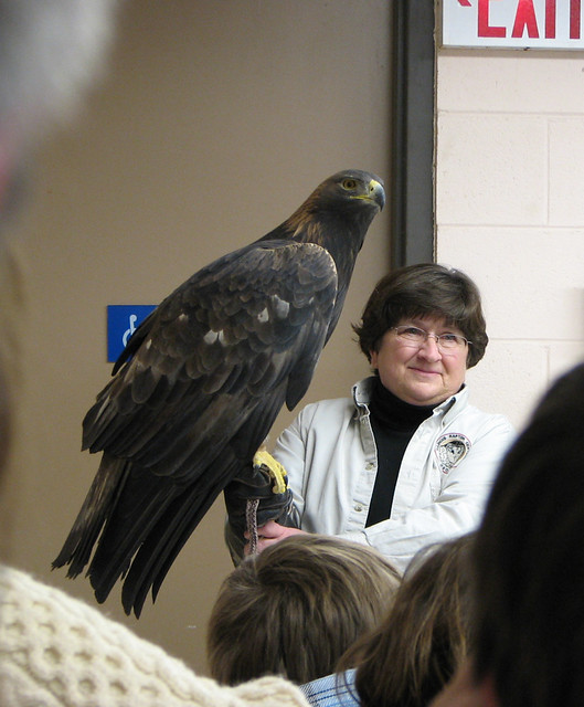 Raptor Program Golden Eagle