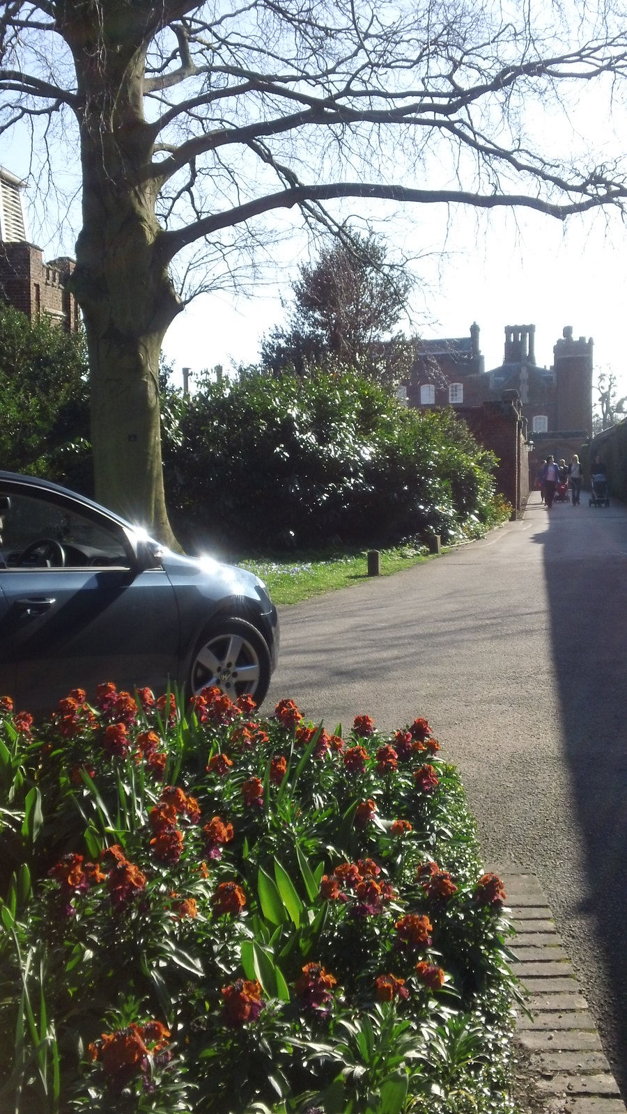 Hampton Court flowerbed... ...as car drives by to spoil the shot