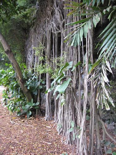 kauai IMG_5632