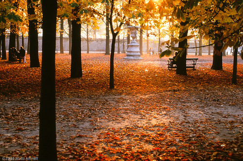 Autumn leaves in Jardin des Tuileries