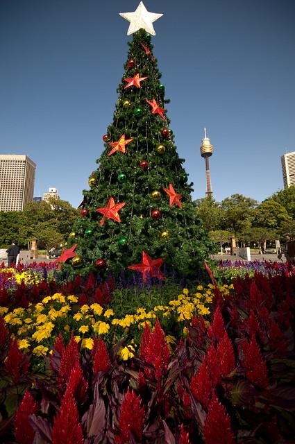 Christmas Tree in Sydney