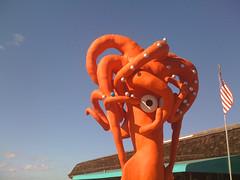 attack squid