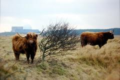 Power grazing