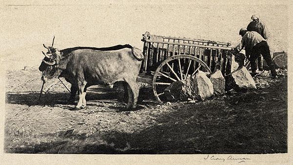 Bueyes en Toledo. Foto del escocés James Craig Annan en 1914. The Metropolitan Museum of Art, New York