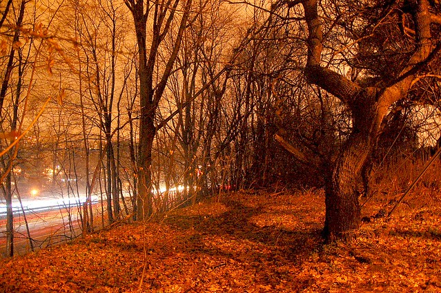 A walk through the rain off the side of the haunted Saw Mill River Parkway in Yonkers tonite. Wet, cold, rainy and beautiful!