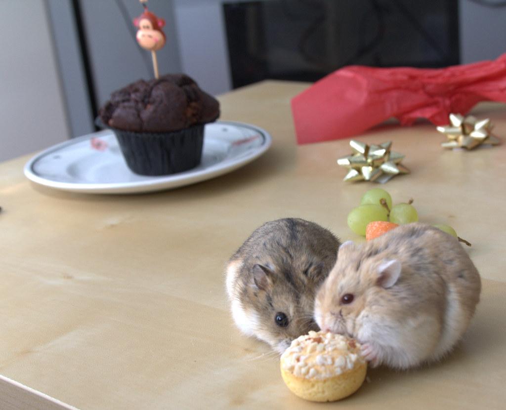 Hamsters By Woody Monsters