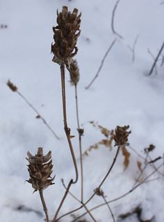 Self-healgonetoseed