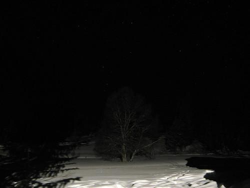 winter tree norway norge nightimages baum valdres oppland ellingsaeter