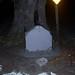 CHL# 756 - SYCAMORE TREE