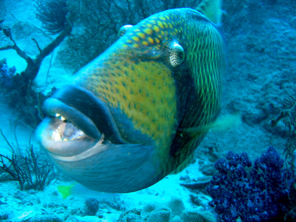 smiling mustache trigger fish a photo on flickriver