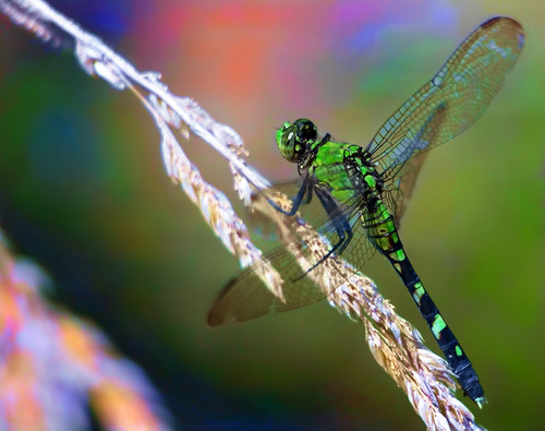 Look ~ A Dragonfly!