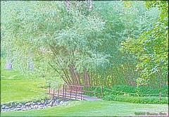 Arboretum Bridge 1