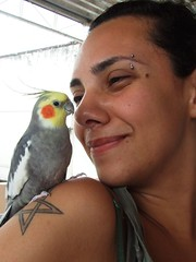 nose, cockatoo, animal, pet, fauna, cockatiel, beak, bird,