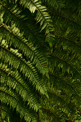 rainforest, branch, leaf, plant, green, natural environment, ostrich fern, ferns and horsetails, vegetation,