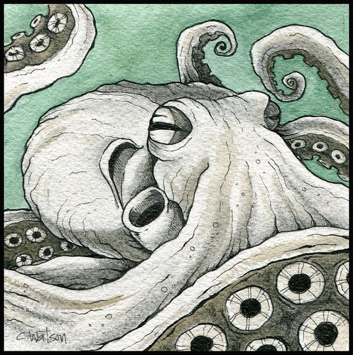 Giant Pacific Octopus Drawing Giant Pacific Octopus