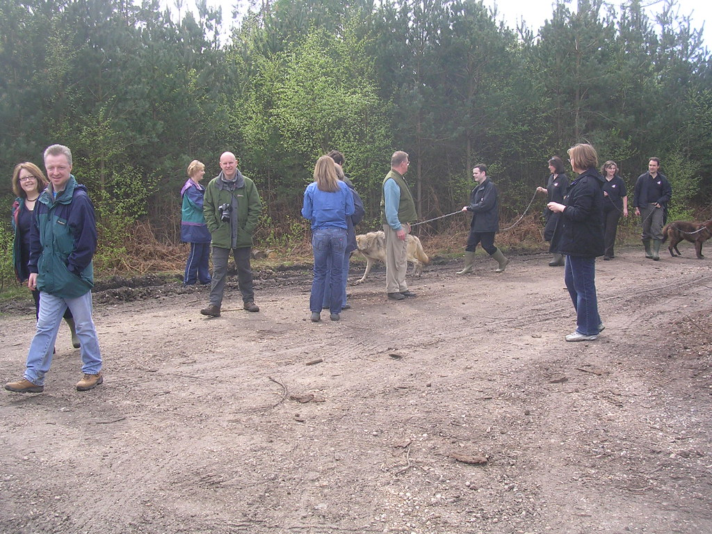 Something you dont see every day... People taking wolves for a walk. (A wolf conservation trust is based nearby.) Mortimer to Aldermaston