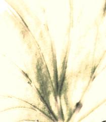 leaf veins (sepia)