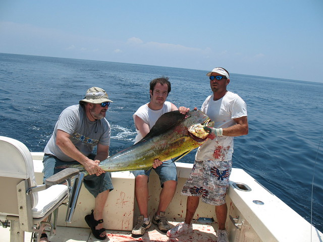Mahi mahi 20 minutes 2 men to coax this 42 lb big for Deep sea fishing daytona