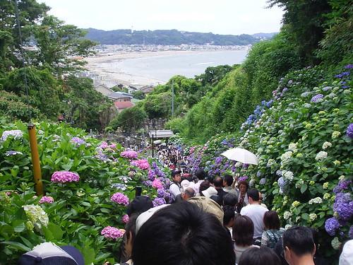 2008/06/16 鎌倉のあじさい