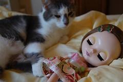 B365:244 Cat Nap